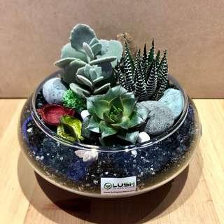 🚚 Perfect Gift for Valentine's Day/ V Day/ Valentine/ Anniversary/ Christmas/ Xmas/ Birthday/ Congrats/ Farewell/ House warming - Real Plant Succulents/ Cactus Terrarium