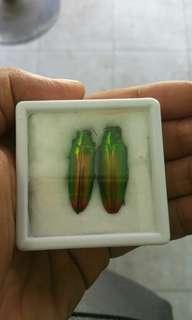 Samber lilin