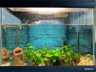 2 feet Mirabello aquarium with filtration system with 11W light