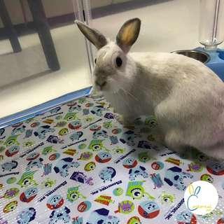 Cottontail Inn Rabbit Boarding