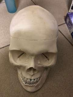 護理系上課用骨頭