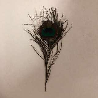 Peacock Feather ( 1 piece )