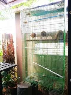 Sangkar burung (Birds Cage)