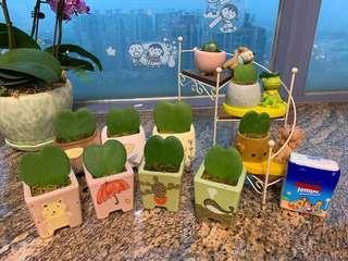 迷你心型葉,節日禮物🎁 辦公室盆栽 家居擺設