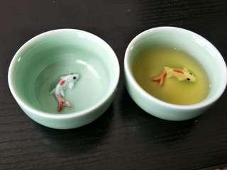 Fish in tea cup