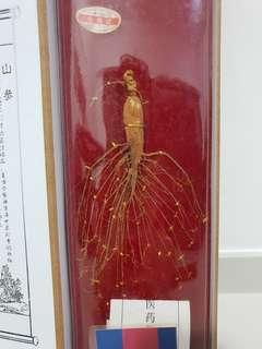Dried Wild Ginseng Certified on 5th Nov 2006 (20g) 生矖山參一支 (20克)