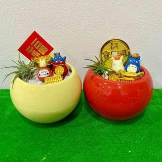 Daruma Totoro & Friends Good Luck Airplant Terrarium