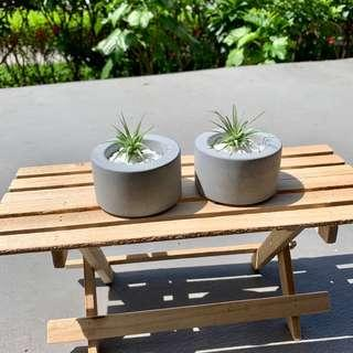 Home & Decor Air Plant Terrarium Round Clay (1 pair)