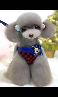 Dog Harness - Blue Mickey Mouse design