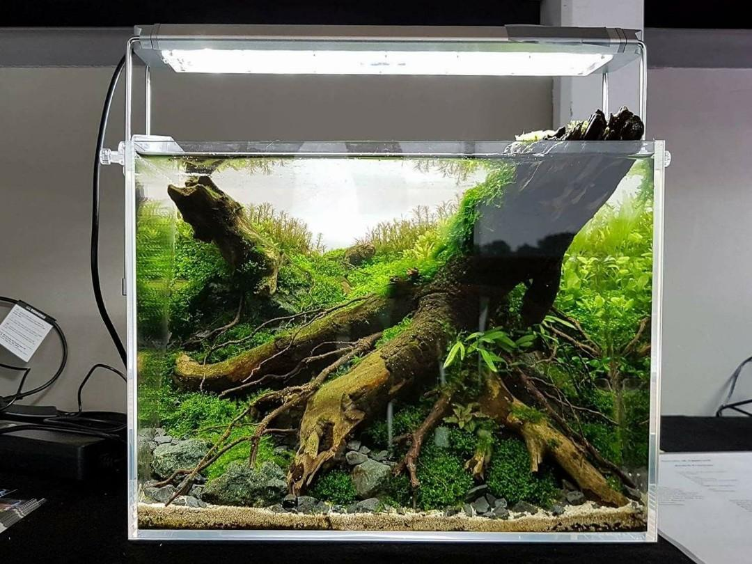 Plant Ada Style Aquarium Fish Tank Shrimp Fish Pet Supplies For Fish Fish Food On Carousell