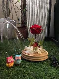 Rose in jar with LED light