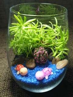 A pair of cute tortoise terrarium