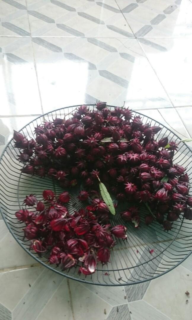 Spesialis teh rosella, #tehHerbal, diet, alami dari kebun langsung