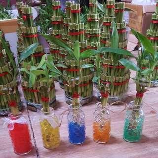 Bambu Hoki Hidrogel