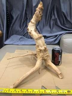 Driftwood #2