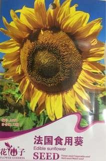 🚚 Sun Flower seeds