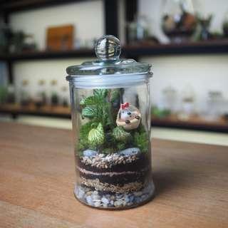 Rainforest Terrarium (Small) - S1