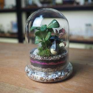Domo Terrarium (Small)- DM2