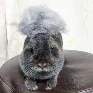 Housecall rabbit grooming