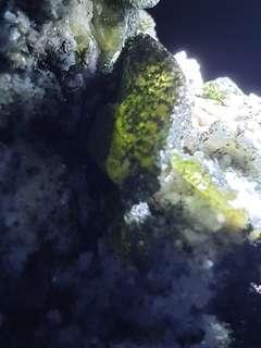 Olive Green Sphene, Titanite cover with Dark Green Fengite Crystal on Matrix from Ankarafa, Madagascar