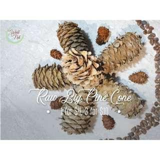 Raw Big Pine Cone