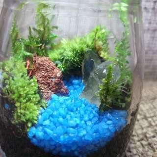 A crystal little moss terrarium