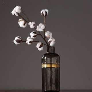 Dried Cotton flower aka Gossypium hirsutum