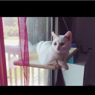 Cat Bed Window Mounted hammock ,