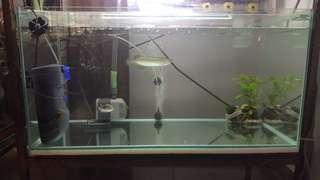 3ft fish tank/ Free delivery