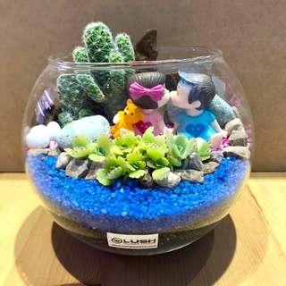 🚚 Perfect Gift for valentines/ Anniversary/ Birthday/ House warming/ Christmas/ - Real succulent Plant Terrarium