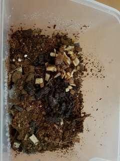 Composting Starter Kit