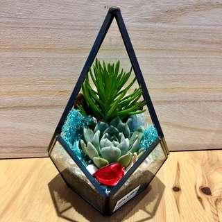 🚚 Perfect Gift for Valentines/ Vday/ Anniversary/ Birthday/ Christmas/ Congrats/ Farewell/ House warming/ Event Gifts- Real Plant Succulents/ Cactus Geometric Terrarium