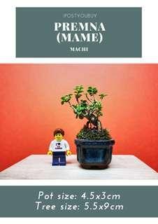 IPY092 - Mame Premna - Machi (Thumbheld)