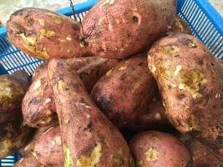 UBI KELEDEK RM 2.50 per kilo