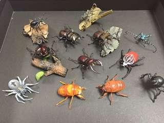 🚚 Super RARE life like Beetle collection !!