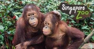 Singapore Zoo $23