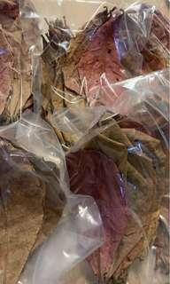 Red cepung Ketapang leaves