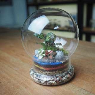 Tinkerbulb Terrarium - Tinker 1