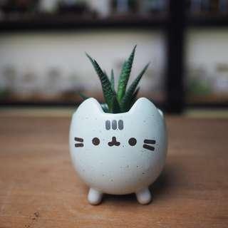 Kitty planter with Hawortia - Kitty 1