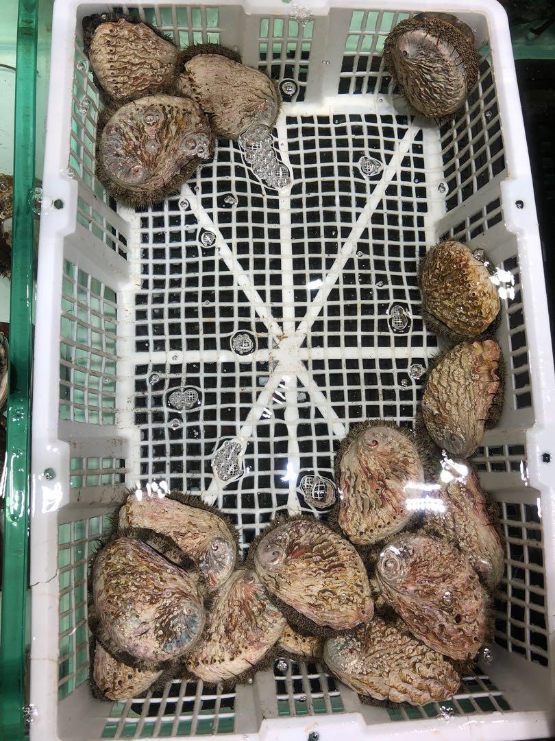 翡翠鮑魚(8頭) 韓國大鮑魚(6~7頭) 南非鮑魚(8頭)  ‼️歡迎PM 🇿🇦🇿🇦🇿🇦🇿🇦🇿🇦🇿🇦🇿🇦🇰🇷🇰🇷🇰🇷🇰🇷🇰🇷🇰🇷🇰🇷🇰🇷
