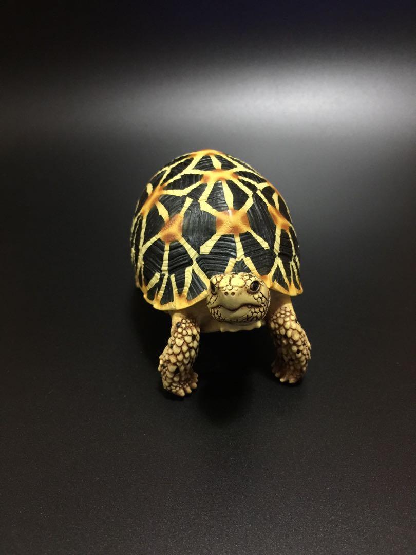 仿真星龜模型擺件