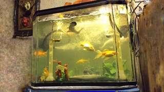 32.1 Gallon Fish Tank