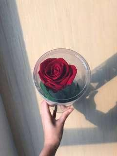 🚚 Preserved rose with stem can lasts for a year