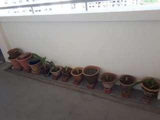 🚚 Assortment pots with soil
