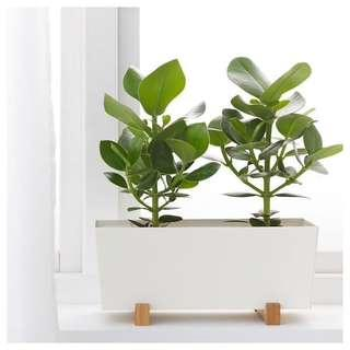 Ikea Plant Pot with Stand