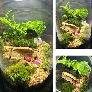 Moss and Fern Terrarium