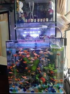 魚缸燈LED水族 養魚