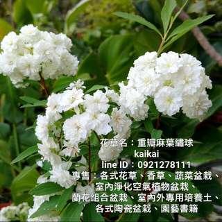 新進花草園藝盆栽101-200,歡迎購買!