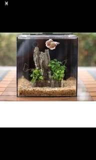 EcoQubeC Aquarium - Desktop Betta Fish Tank/ Shrimp Tank For Living Office And Home Décor (Light Not Included)