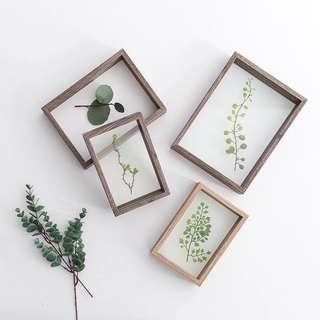 Plant in frame